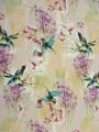Kolibrie voile